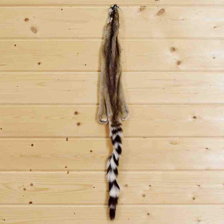 Ringtail Fur for Sale - SW4479