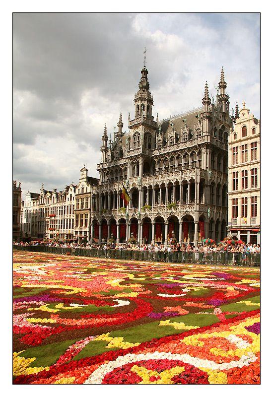 la grand place de Bruxelles avec son tapis de fleurs annuel BELGIQUE
