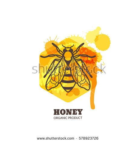 Simple Honey label emblem tag design elements Vector hand drawn outline honeybee on watercolor