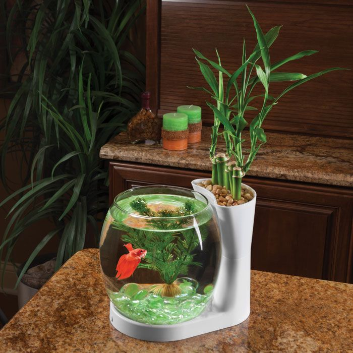 Elive Betta Bowl & Planter - .75 gal. - White http://www.thatpetplace.com/elive-betta-bowl ...