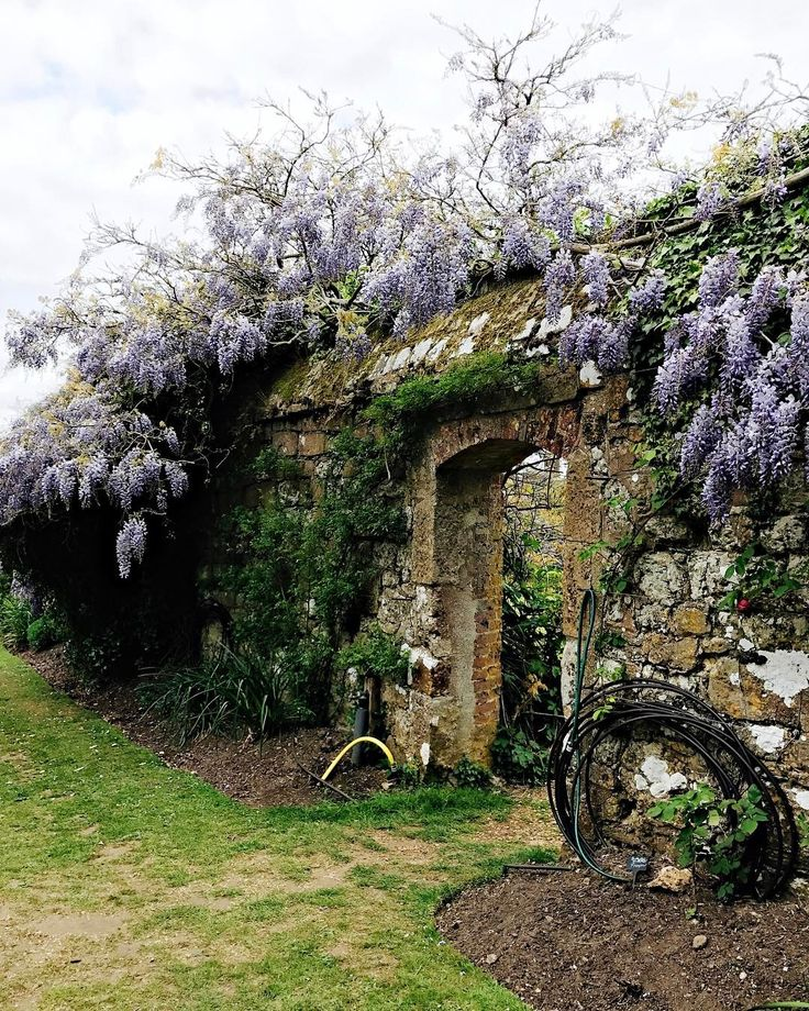 I went to Sevenoaks in Kent today to see the wisteria wall at Knole House. The whole garden is gorgeous with azaleas and a bluebell walk and there were actually several wisteria walls. Check out my stories for a video of the longest wall. They said the wisteria has suffered due to frost from low temperatures at the weekend - in May!  I also had a cup of tea and a flapjack but left a tour of the house for another day  Oh and I saw baby deer in the deer park  Sevenoaks the town looked pretty…