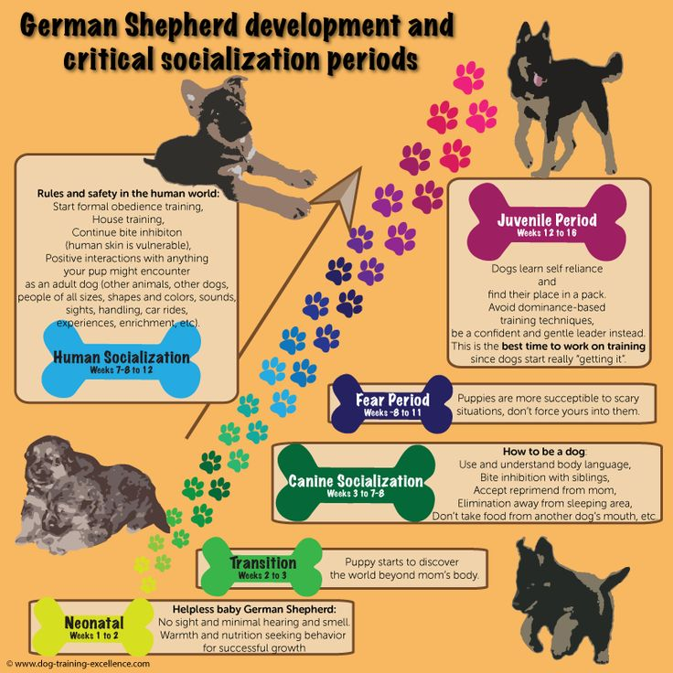 German Shepherd Puppy Training Guide