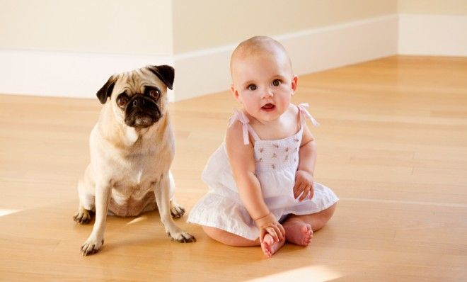 What science says your dog and baby have in common