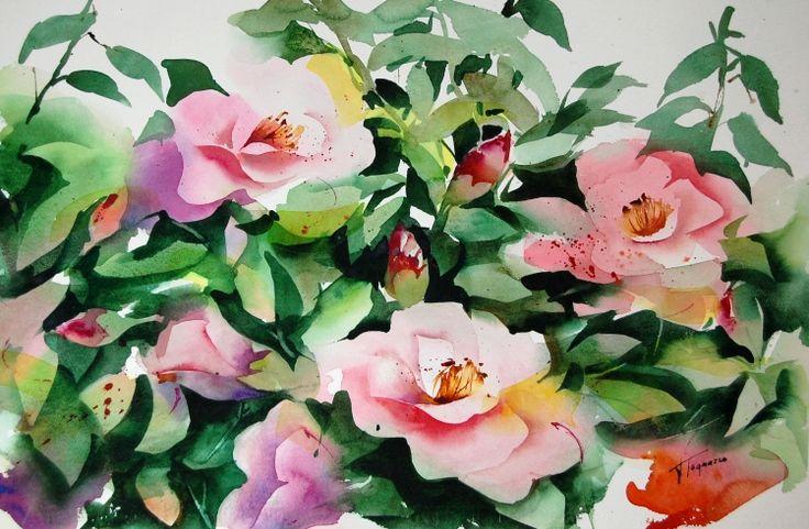 Camelie rosa    acquerello cm 35 x 50
