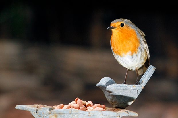 Birds will appreciate any food you can offer but it's important to know the right things to provide and what to avoid. Follow our simple feeding guide.