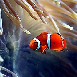 Fort Fisher Aquarium | Oak Island Aquarium | Oak Island Accommodations