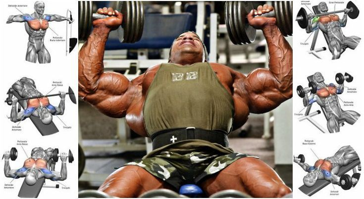 how to build muscle size and strength