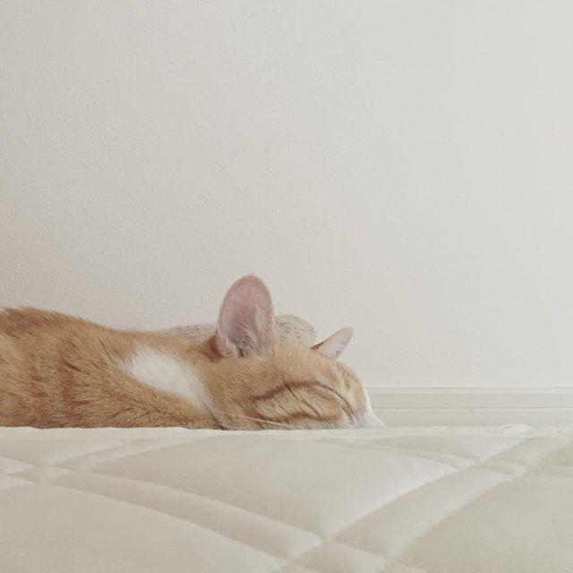 GM ベッド脇の小さなベッド(敷きパッドを畳んで置いただけ)の上で寝ていた ω 起きたくなくなった by tomochunba