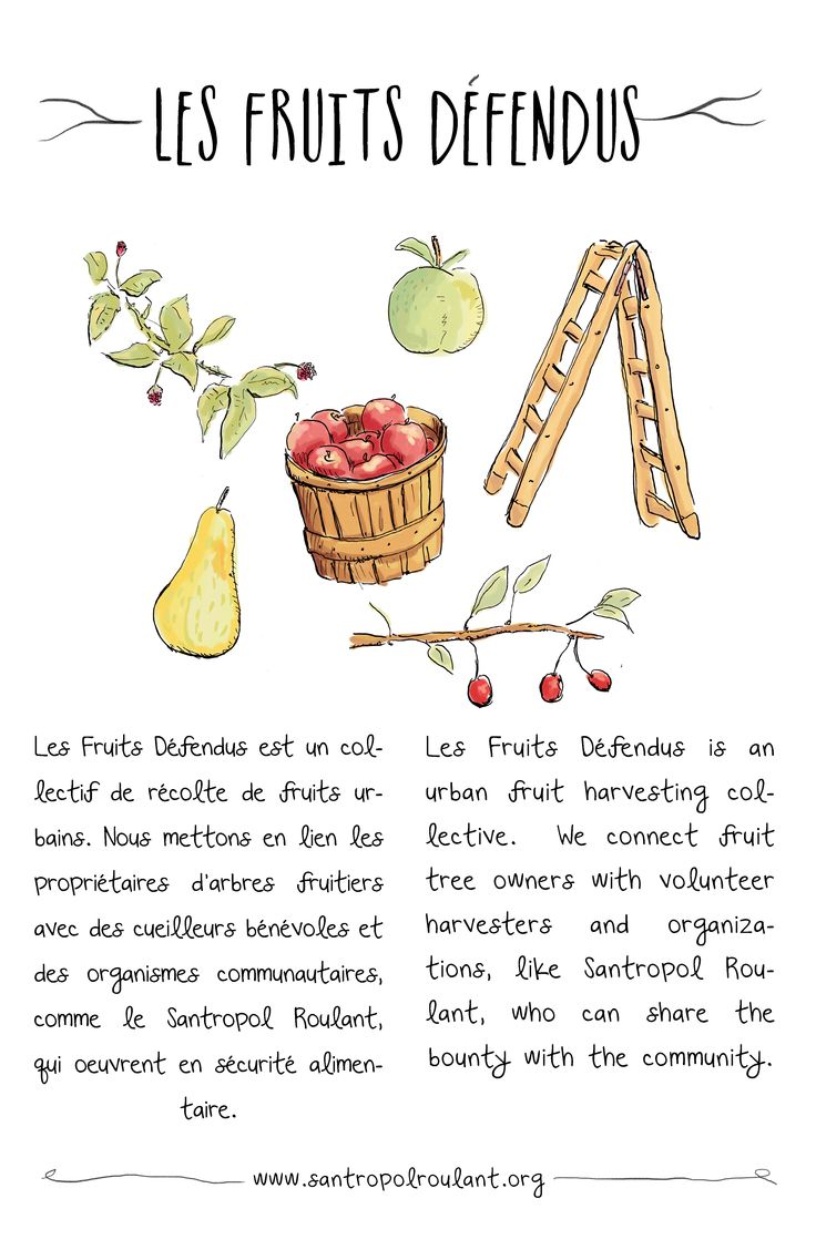 An illustration for Santropol Roulant's urban fruit tree gleaning program.