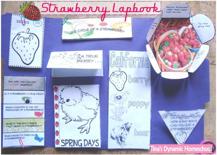 Strawberry Lapbook.  #homeschool