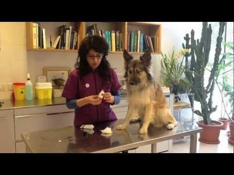 come pulire le orecchie al proprio cane!       #animals