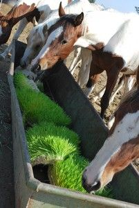 37 best images about Fodder Feed System on Pinterest ...