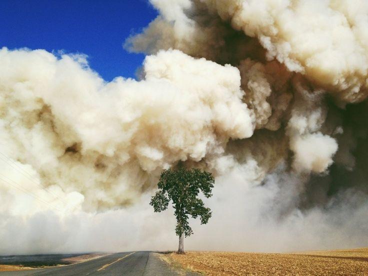 field burning in Scio, Oregon.