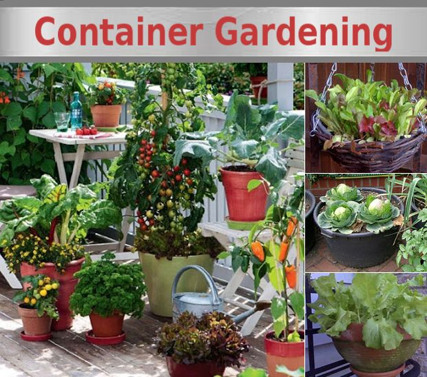 6200 best gardening for beginners images on pinterest vegetable garden vegetables garden and - Container gardening for beginners practical tips ...