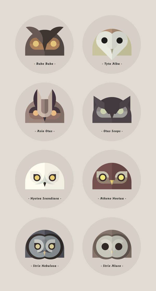 Owls of the World on Behance http://www.behance.net/gallery/Owls-of-the-World/3378303