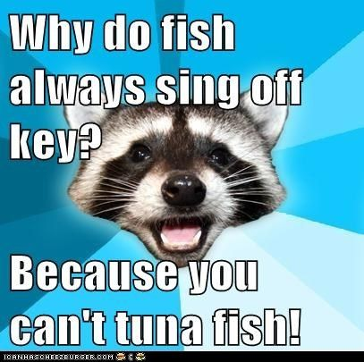 advice animals memes  - Animal Memes: Lame Pun Coon: What About a Salad?
