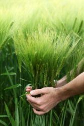 Ποιοί παράγοντες επηρεάζουν την συντήρηση των τροφών
