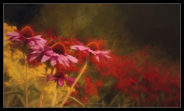 https://flic.kr/p/AMcWb9 | Le jardin de nuit (The Night Garden) | Le jardin de nuit  « Dans nos vies, il n'y a qu'une couleur, comme sur la palette d'un artiste, qui donne le sens de la vie et de l'art. Et c'est la couleur de l'amour. » Marc Chagall, peintre ----------------  The Night Garden  «  In our life there is a single color, as on an artist's palette, which provides the meaning of life and art.  It is the color of love. » Marc Chagall, painter