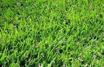 The Dirty Gardener Coated Bermuda Grass (Green) Seed - 10 Pounds