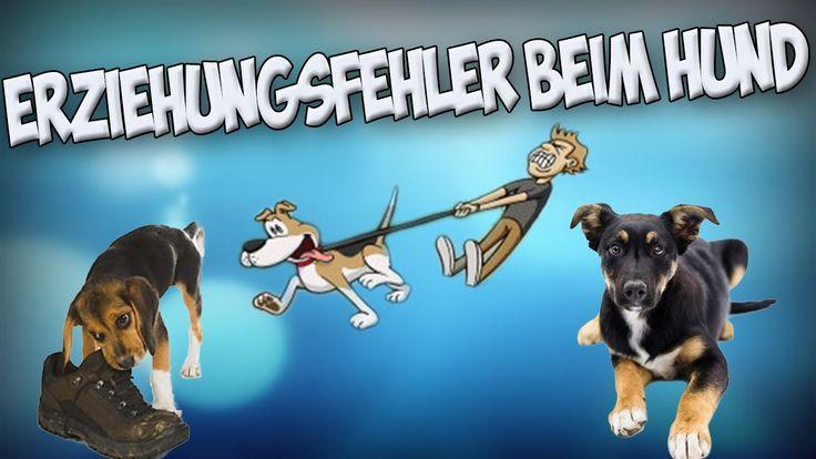 Die größten Fehler in der Hundeerziehung! Hund richtig erziehen! Tipps!!