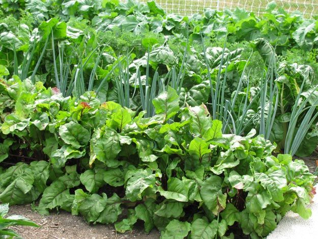 Planting Tips For Spring Cold Hardy Heat Seeking And