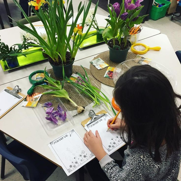 """60 Likes, 2 Comments - Laura King (@kindergartenteachertired) on Instagram: """"Bringing the springtime inside with some plant exploration! 🌱🌷🌻🍃 We set up this provocation to…"""""""