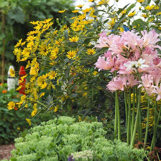 17 Best Images About Flowers Plants Summer On Pinterest