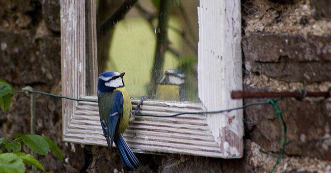 Specchi da giardino: come utilizzarli al meglio