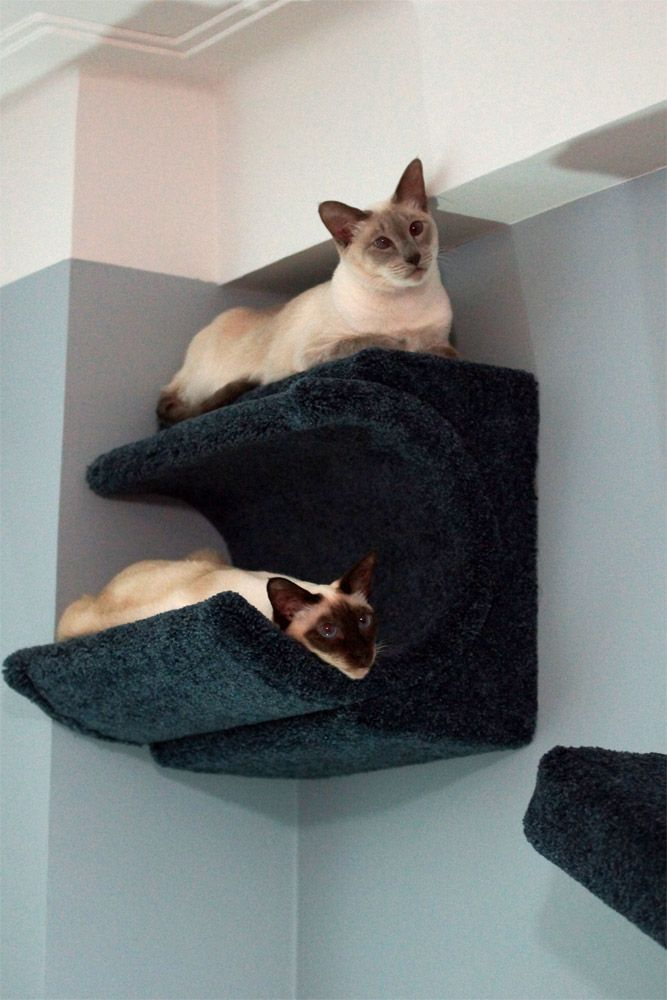 cat shelves catsplay cat furniture fall finds fun new. Black Bedroom Furniture Sets. Home Design Ideas