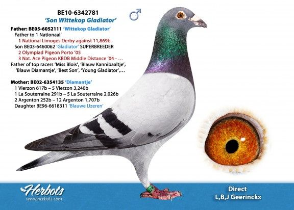 BE16-6275069 • BART VERBEEK