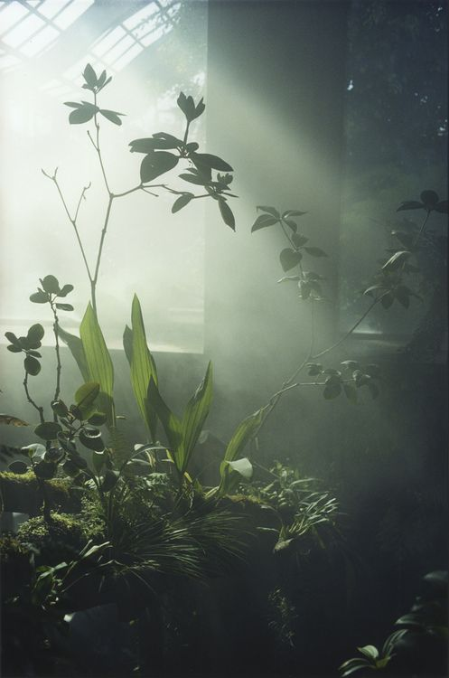 beautiful light in greenhouse