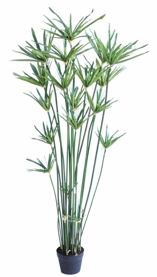 Papyrus artificiel 150cm artificiel plantes for Belle plante artificielle