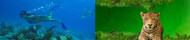 5 actividades acuáticas para tus vacaciones