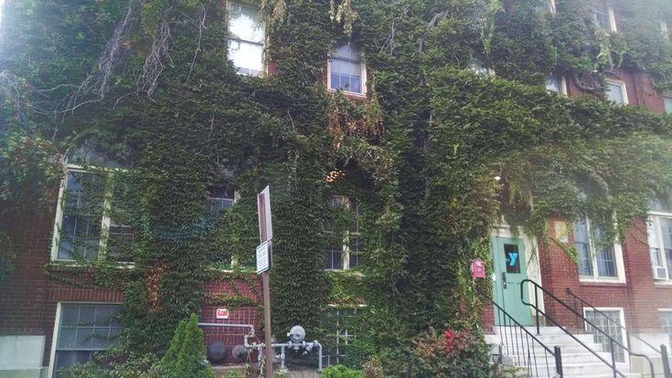 #brick #building #green #old #red #vine