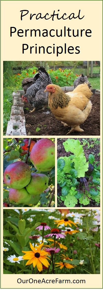 Finally, a permaculture article that doesn't read like a religion. Permaculture may well be the key to sustainable food production, and this article focuses on the practical, biologic dimensions, so you can apply the basic concepts in your own garden or farm. Suggestions and examples are given.