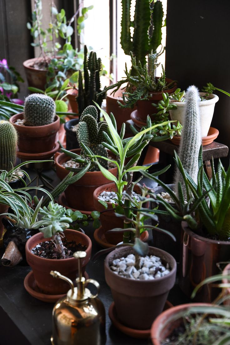 17 best ideas about plant decor on pinterest house - Pot deco interieur ...