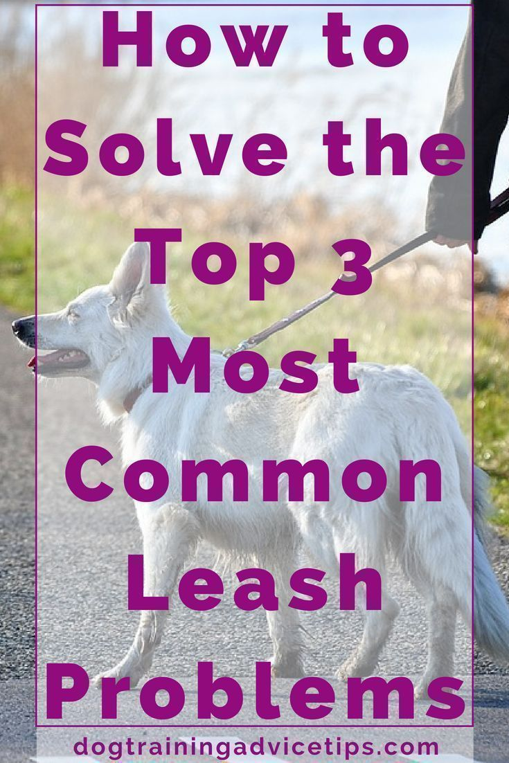 How To Solve The Top 3 Most Common Leash Problems Dog Obedience