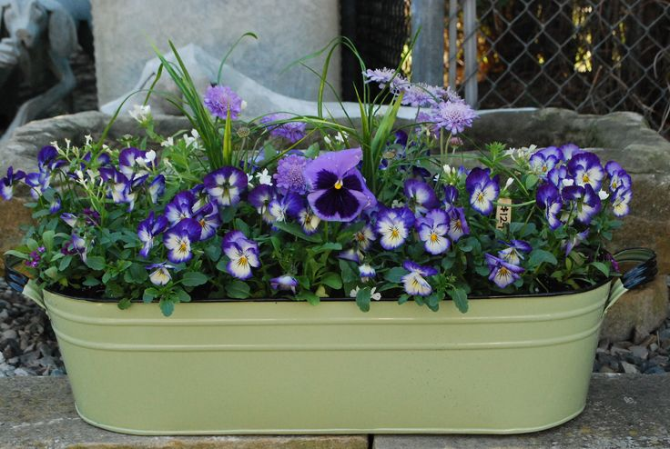 spring planting in an oval tub: Garage Wall, Pansies In Container, Violets, Flower Pots Plants, Spring Container Plants Jpg, Gardens Flower, Spring Plants, Plants Flower Gardens,  Flowerpot