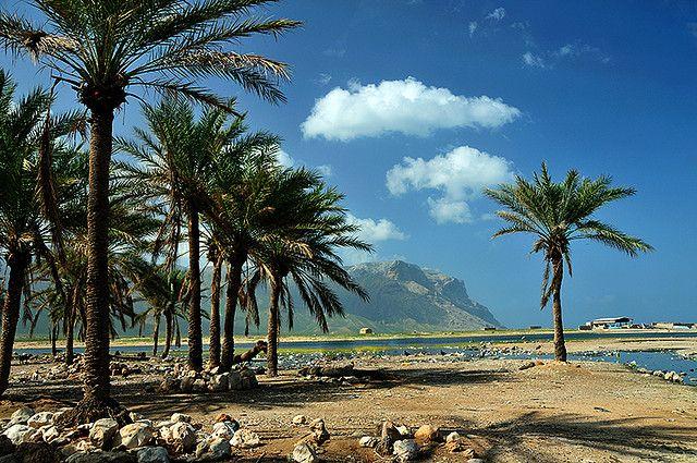пальмовый пляж на одном из оазисов острова Сокотра