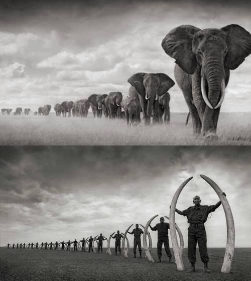 This picture says it all..!! STOP POACHING KENYA'S ELEPHANTS! Nick Brandt photo, artist/conservationist
