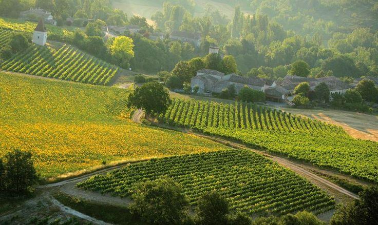 Spring vineyards in the gaillac wine region, a vineyard near Brin de Cocagne - eco-friendly b&b near Albi - Brin de Cocagne