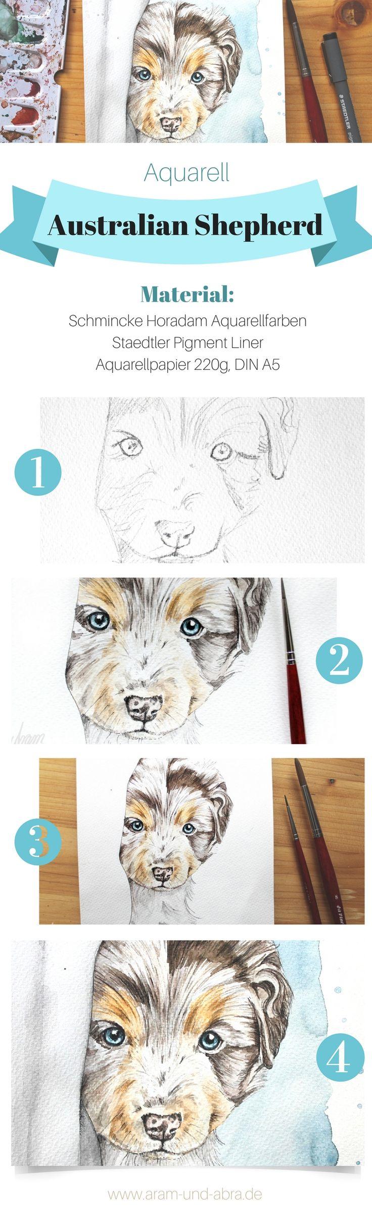 Zeichnung Aquarell von Hund Buddy (Australian Shepherd). Tierportraits und Illus…