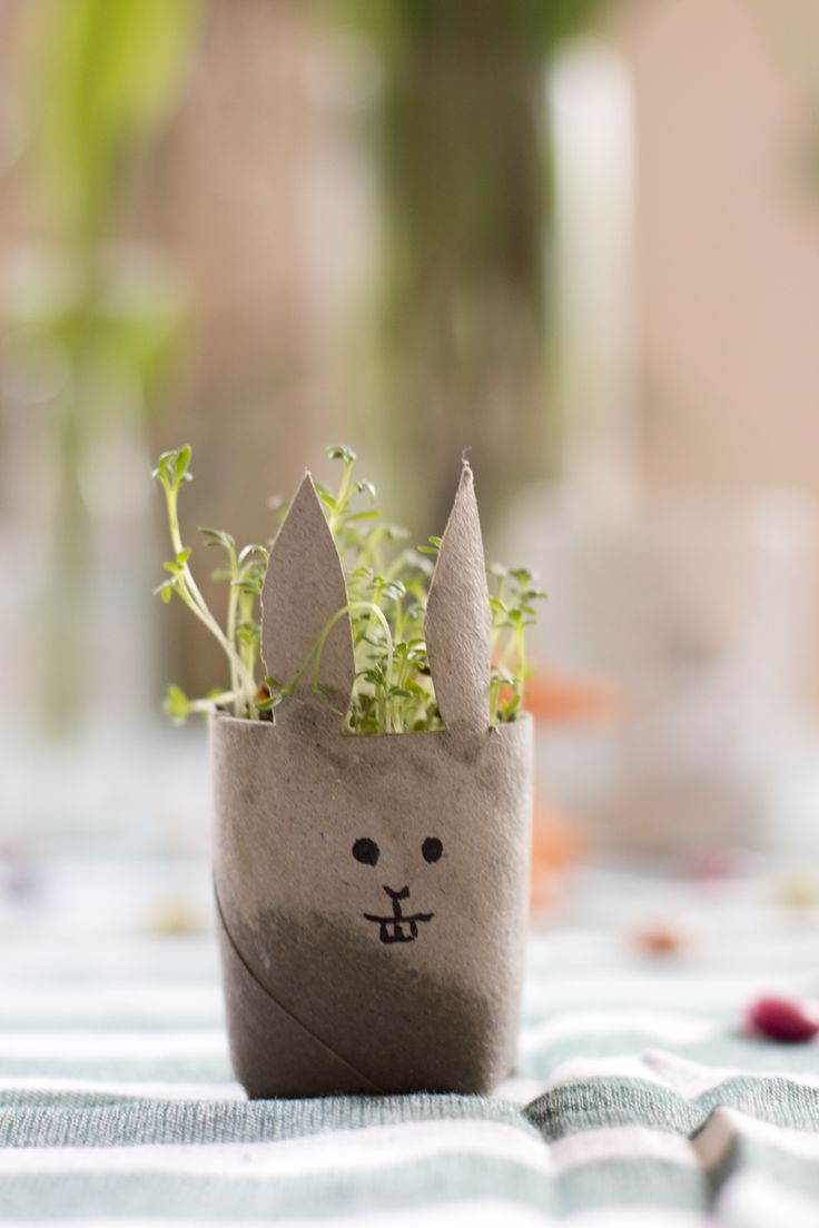 Cress bunny DIY out of an old toilet paper roll | LOOK WHAT I MADE ...