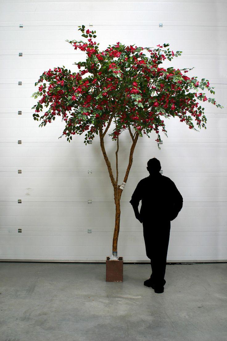 25+ trending Bougainvillea tree ideas on Pinterest   Mediterranean ...