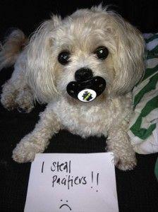 dog shaming, funny dogs