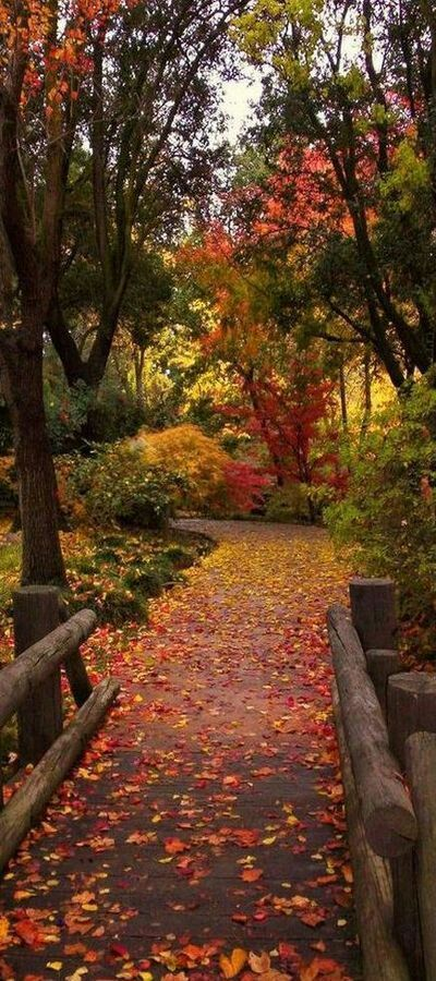 Autumn pathway – Gülşen