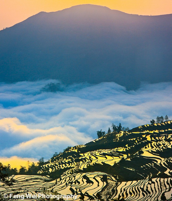 The glorious sunrise over the terraced rice fields on top of Ailao mountain @ Yuanyang, Yunnan province of China   By Feng Wei Photography (flickr)