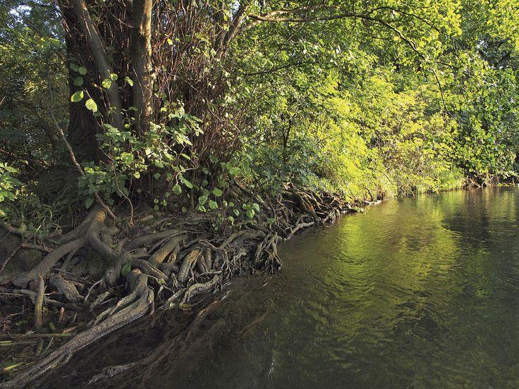 Les 93 meilleures images du tableau arbres et bambous sur for Les arbres du jardin