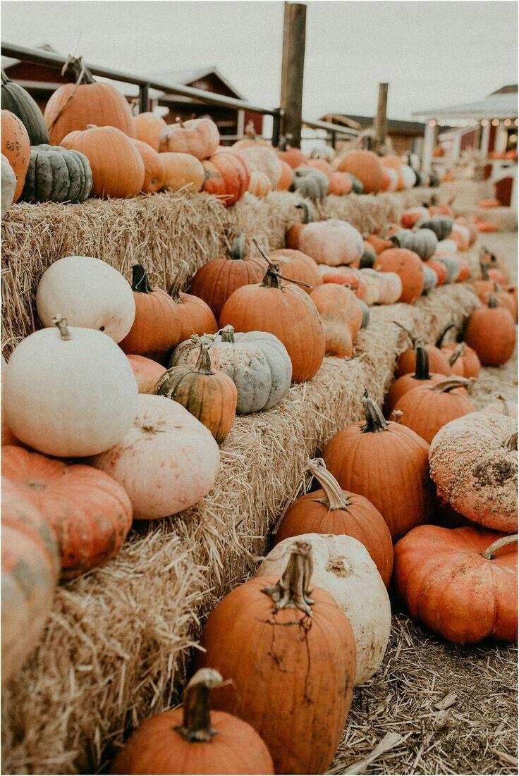 Pumpkin Parade Cute Fall Wallpaper Fall Wallpaper Autumn Inspiration