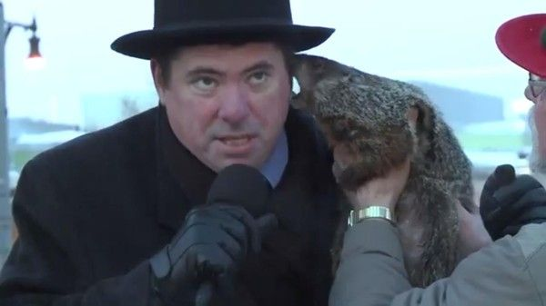 """Disgruntled Groundhog Makes Clear What He Thinks Of Silly Ceremony  Wisconsin groundhog named """"Jimmy"""" has had it being a part of Groundhog day and bites the mayor on the ear  #ExploitedAnimals  https://www.thedodo.com/groundhog-bites-mayors-ear-969744809.html"""